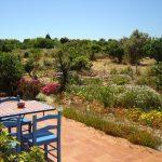 View towards the orange grove