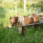 Donkey next door
